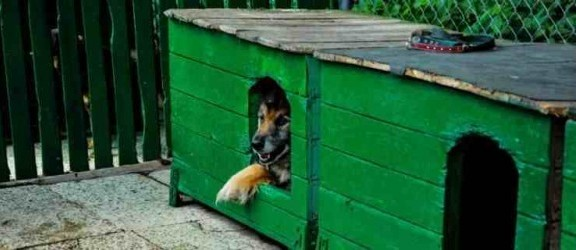 Powrót podatku od psów? Tego chcą mieszkańcy
