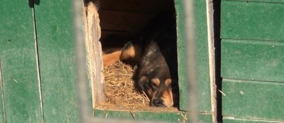 Bezpańskie psy atakują mieszkańców okolic Elbląga