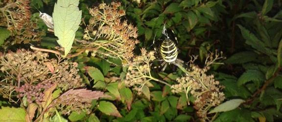 Jadowity pająk na elbląskim placu zabaw! (foto/video)