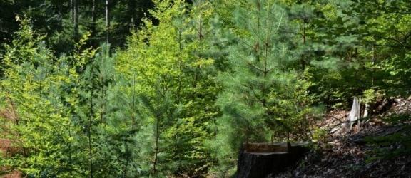 """Elbląscy leśnicy apelują: """"Planujecie wycieczki, pamiętajcie, że nie wszędzie można teraz wchodzić do lasu!"""""""