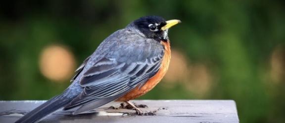 Dzisiaj (29.09) rozpoczynają się Europejskie Dni Ptaków