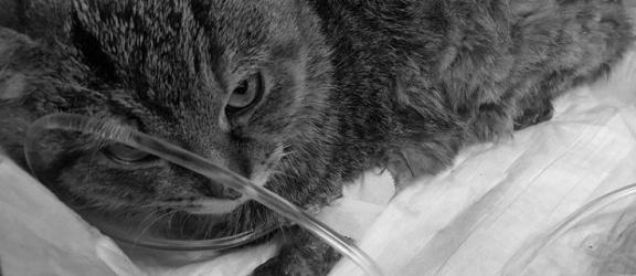 Elbląg. Trzy koty grzały się w płynnym asfalcie. Zginęły wszystkie