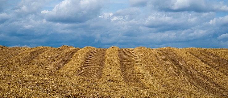 Duże zmiany w składaniu wniosków o dopłaty bezpośrednie dla rolników