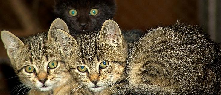 Walka z kotami przybiera różne formy... Elbląskie ogłoszenie rozbawiło internautów