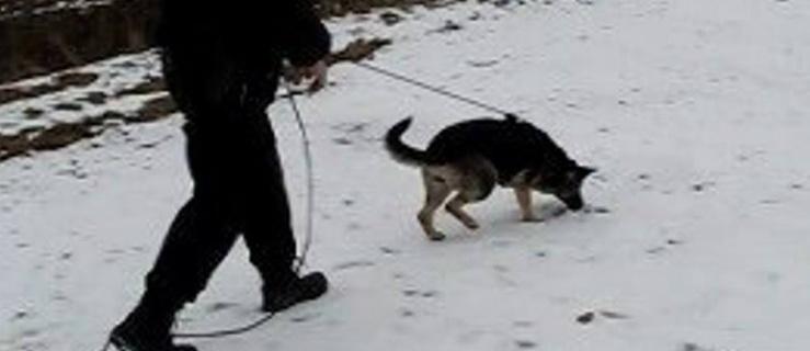 Elbląg/Pasłęk: Włamali się do sklepu. Policyjny pies doprowadził do zatrzymania podejrzanych