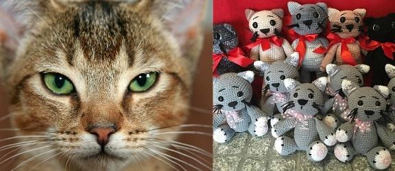 V Elbląska Rewia Kotów ze Schroniska