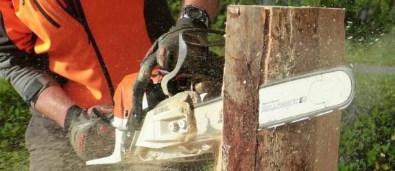 Zniknie ponad 500 drzew na trasie Mikoszewo – Drewnica - Dworek