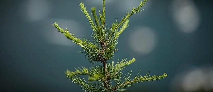 Nadleśnictwo Elbląg zaprasza wszystkich elblążan na sadzenie lasu z leśnikami oraz ognisko
