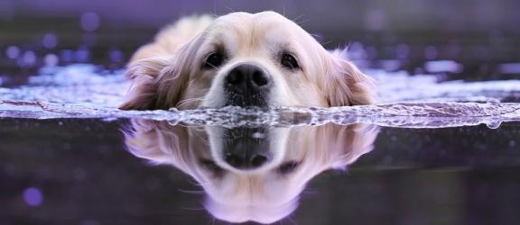 """Konkurs fotograficzny """"Mój pies i woda – bezpieczna przygoda"""""""