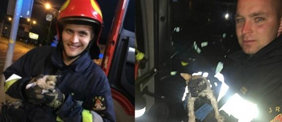 Elbląg. Strażacy uratowali kotka na ulicy Teatralnej