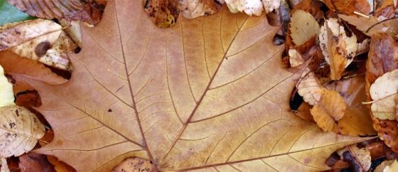 Jak poradzić sobie z jesiennym bałaganem w ogrodzie?
