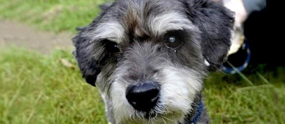 Pomóżmy uratować wzrok adoptowanemu psu. Wolontariuszka zachęca do zbiórki