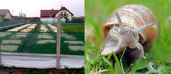 Dni otwarte PSH. Okazja do obserwacji hodowli ślimaków