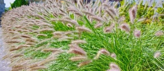 Trawy ozdobne – pięć sposobów na piękny ogród