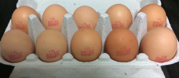 Uważaj na jajka z salmonellą
