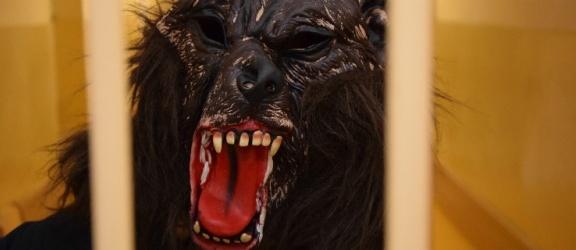 Elbląg: Mężczyzna w przebraniu wilkołaka włamuje się do sklepu