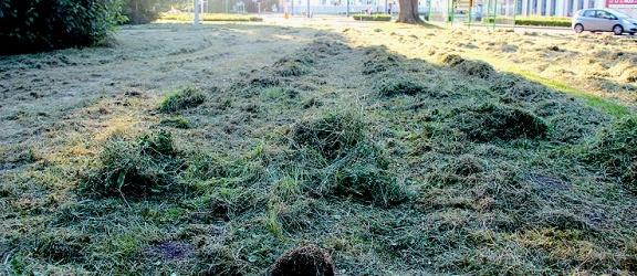 Jeż z małymi pocięty kosiarkami w Parku Planty. Tej tragedii można było uniknąć (+ drastyczne zdjęcia)