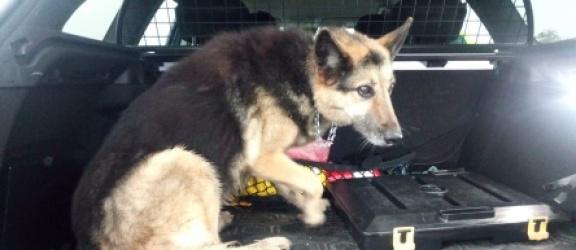 Elbląg: Pies biegał po drodze ekspresowej S7