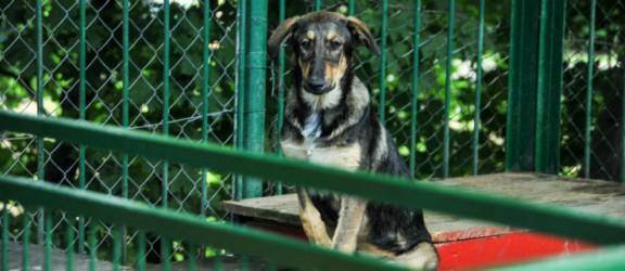 Miasto poszukuje chętnych na remont schroniska dla zwierząt
